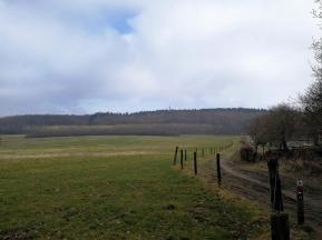Blick vom Molenbeek hinüber zum Westrand des Reichswalds. Gut zu erkennen ist der Feuerwachturm auf deutscher Seite.