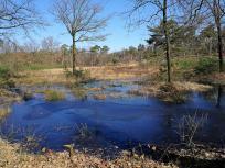 Zahlreiche Wasserflächen prägen die Landschaft im Ravenvennen