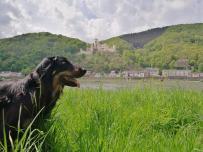 Doxi gegenüber von Schloss Stolzenfels