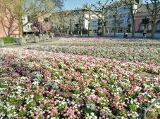 Blumenbeet hinter dem Dom
