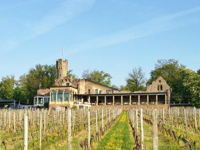Auf dem Hinweg: Weingut oberhalb von Winkel