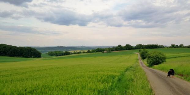 Feldflächen zwischen dem Asseler Wald und Warburg