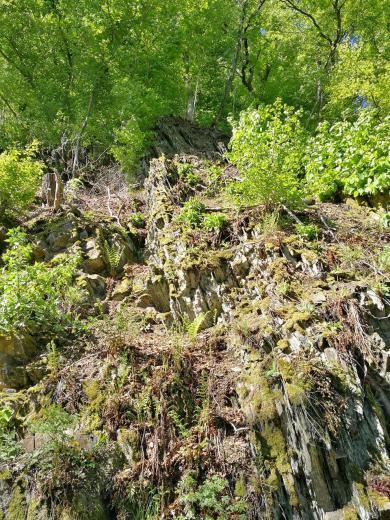 Schiefergestein oberhalb der ursprüngliichen, naturbelassenen Möhne