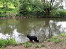 Doxi prüft die Wasserqualität der Diemel