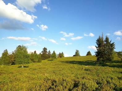Heide auf dem Gipfel