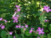 Hübsche Wildblumen am Bachufer