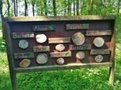 Übersicht über die im Propsteier Wald beheimateten Baumarten