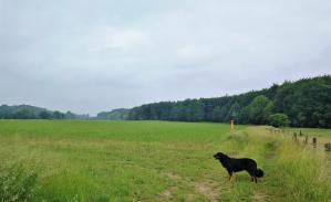 Am Übergang zwischen Hoher Bruch und Niederkamper Wald