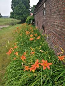 Hübsche Blumen an einer Hofwand