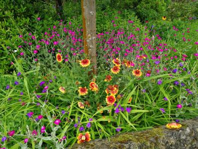 Blumen in einem Vorgarten