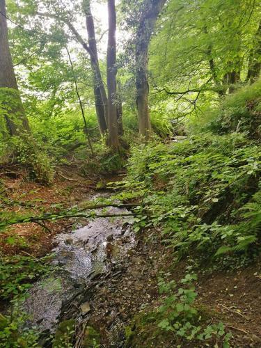 Lauschige Bäche in schattigem Wald