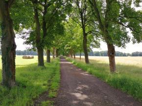 Schöne Allee auf dem Bruchhauser Plateau beim Gut Haanhof