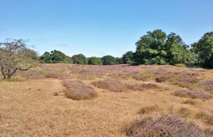 Heidefläche und Hutewald im Naturschutzgebiet