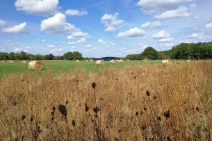 Landwirtschaftlich genutzte Fläche auf dem Hochplateau zwischen Albertkanal und Maas