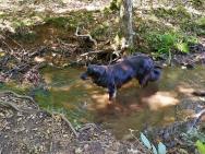 Im Tal des Sührbachs: Endlich Wasser für Doxi.
