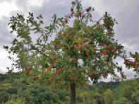 Viele Obstbäume säumen unseren Weg