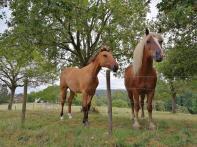 Hübsche Pferde am Schwalberhof