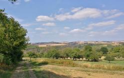 Obstbäume vor dem Moselplateau