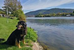 Wir stehen mit dem Womo direkt am Neckar
