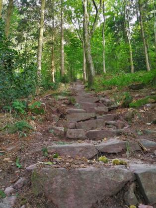 Über 1385 Stufen führt der Weg vom Scloss geradewegs hinauf zum Königstuhl