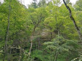 Bewaldete Steilwand im Kiental