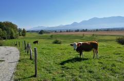 Weideflächen am Rand des Murnauer Moos