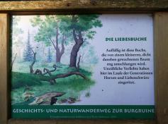 Infotafel am Liebesbaum vor der Ruine der Burg Hohenwaldeck
