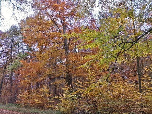 Wie schön es ist, durch den bunten Herbstwald zu laufen
