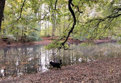 Doxi testet die Wasserqualität des Stadtwaldweihers