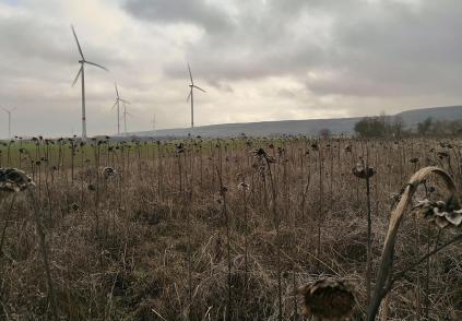 Windräder und Feldflächen am Rande der Sophienhöhe