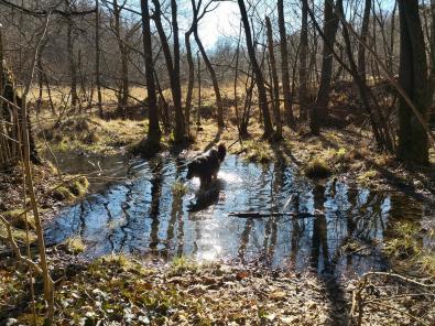 Doxi testet die Wasserqualität an einem sonnenbeschienen Waldtümpel