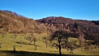 Obstbaumwiese unterhalb der Waldgaststätte