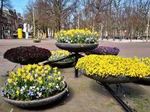 Viel Blumenschmuck und schöne Parks prägen das Zentrum von Den Haag