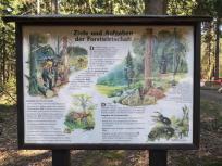 Infotafel am Waldlehrpfad Zweifall