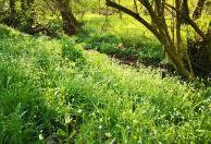 Saftige Wildblumen am Bach