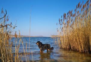 Doxi testet die Wassequalität des Sees