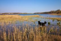 Doxi erkundet die Uferzone