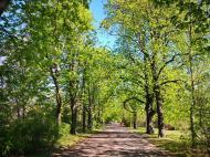 Die Kastanienbäume im Friedenspark sind bereits erblüht