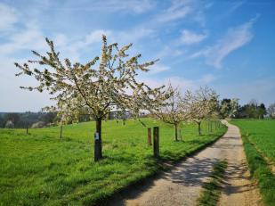 Jeder Baum eine andere Obstsorte