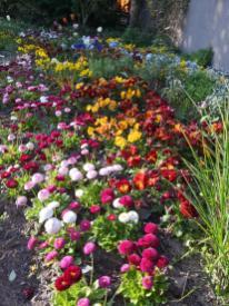 Blumenbeete auf der Freundschaftsinsel