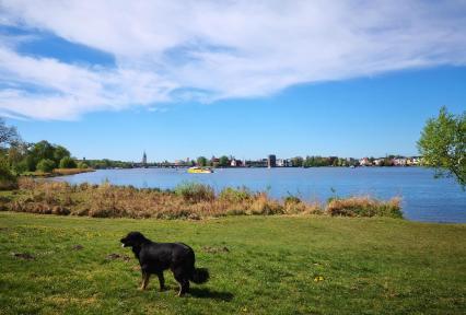 Doxi am Havel-Ufer im Park Babelsberg mit Blick auf die Skyline von Potsdam