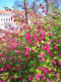 Blüte am Rand des Parkas an der Ilm