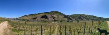 Panoramabild von den Weinbergen bei Minheim