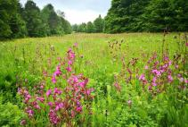 Wildblumenwiese im Salvaticum