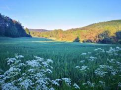 Durch die Wälder bei Blomberg