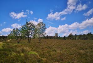 Heidelandschaft im Büsenbachtal