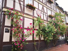 Viele Altstadthäuser sind mit Rosen bewachsen