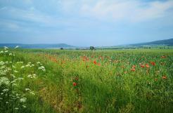 Felder am Fuße des Thüsters