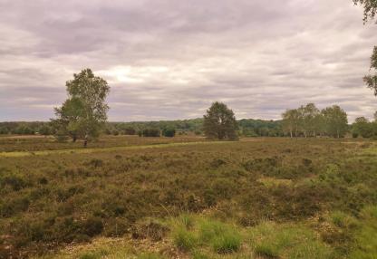 Heide kurz vor Niederhaverbeck