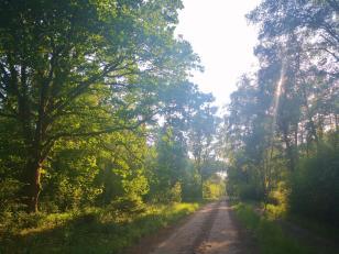 Zwischen Döhlen und Wilsede gib es viel Wald